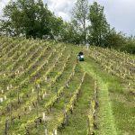 photo d'une OREC RM 60 W en action au sein d'un champ de vigne